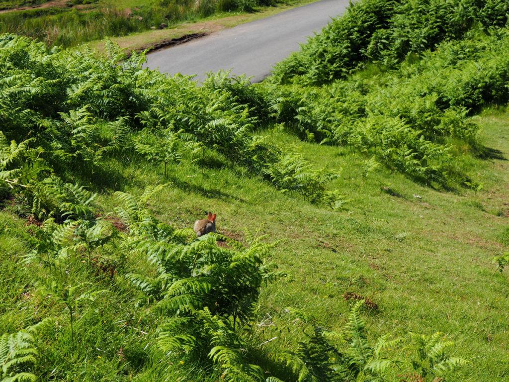 Road trip Scotland Isle of Skye Fairy Glen