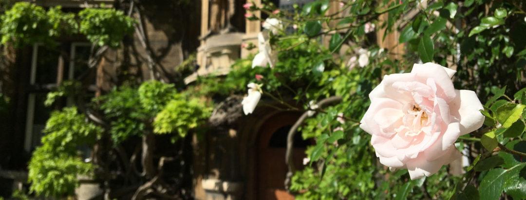 Caius Tree Court