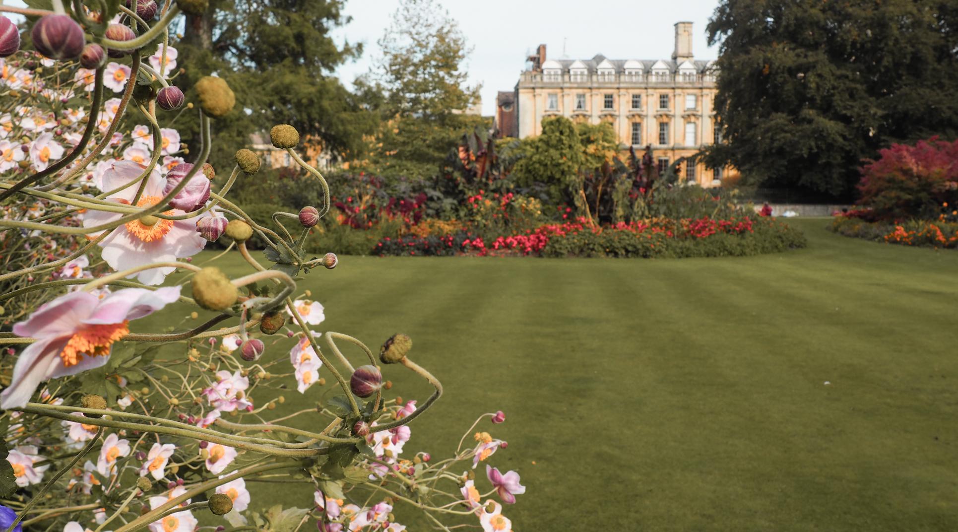 Clare College Cambridge Fellows Garden