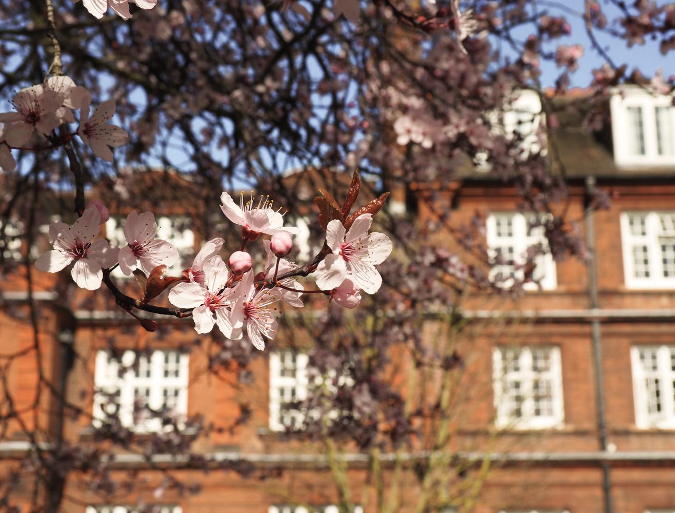 Emmanuel College Spring