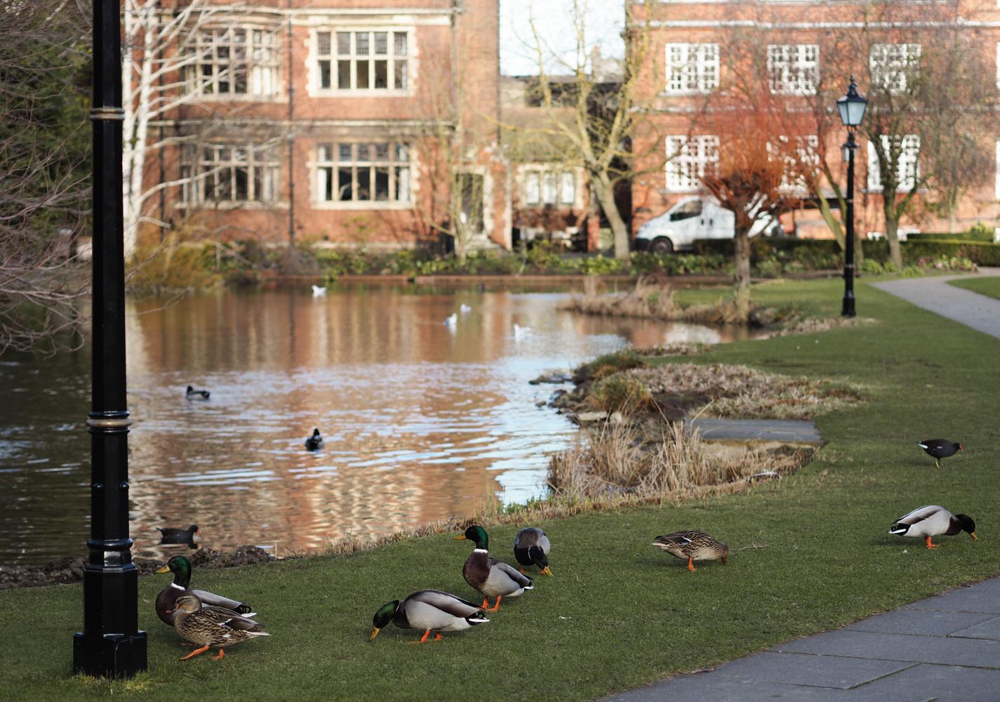 Emmanuel College Cambridge Home Is Here