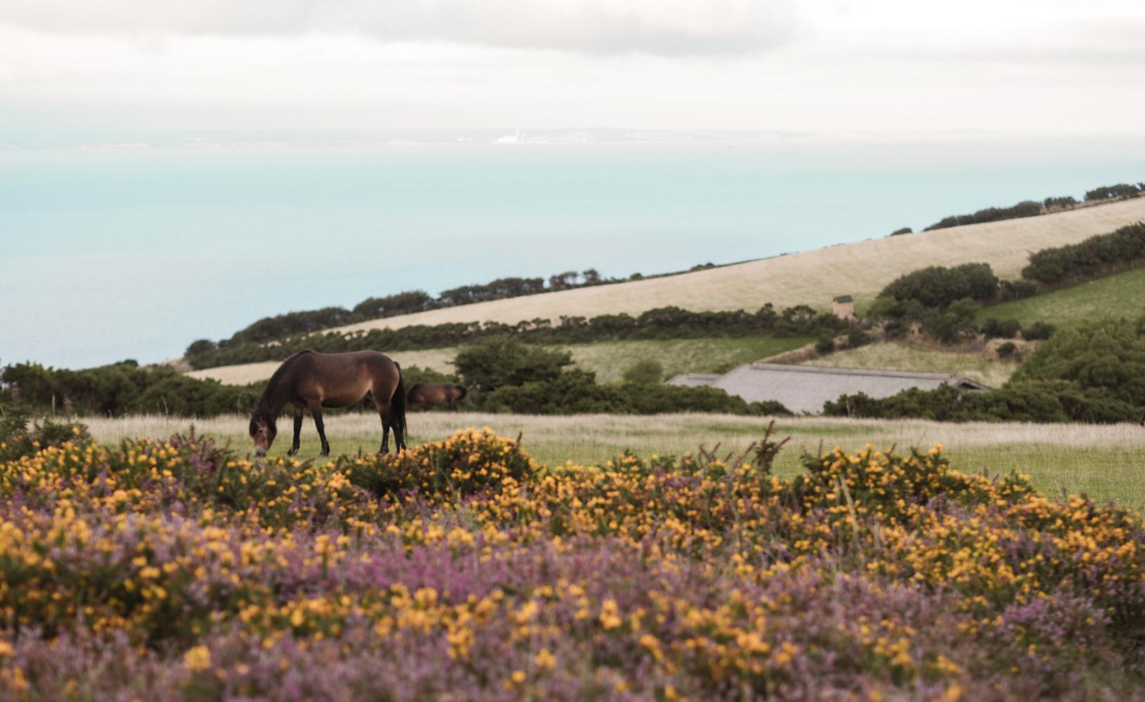 Foreland Point North Devon