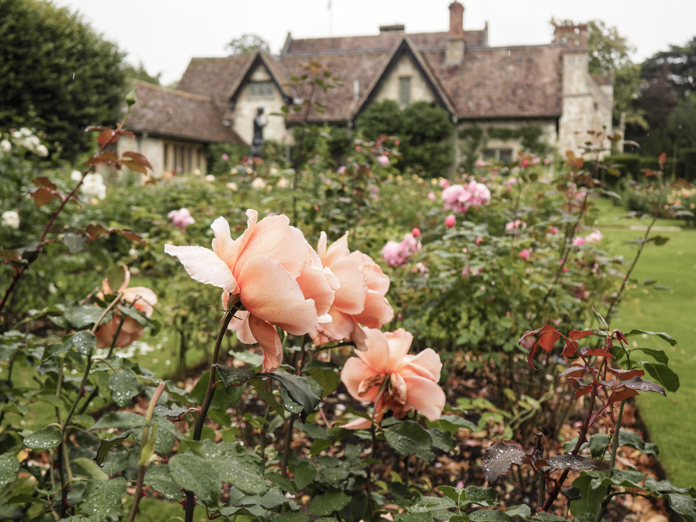 Anglesey Abbey Roses